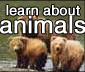 learn about animals