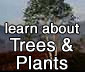 learn about trees and plants